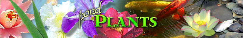 Bonnie's Pond Plant Profiles